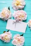 Süße rosa Pfingstrosenblumen und -empty tag auf dem Türkis hölzern Lizenzfreies Stockbild