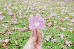 Süße rosafarbene Blumen Lizenzfreie Stockfotografie