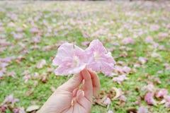 Süße rosafarbene Blumen Stockfotos