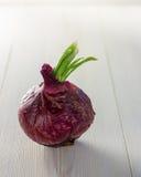 Süße rote Zwiebel lizenzfreies stockbild