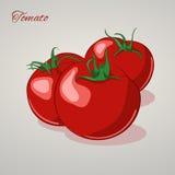 Süße Tomaten der Karikatur auf grauem Hintergrund, Vektorillustration Lizenzfreie Stockbilder