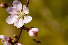 Süße weiche rosa Blume für Hintergrund Stockbilder