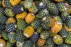 Süßer Ananas-Stapelgarten Stockfotos