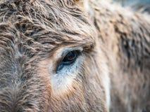 Süßer Blick eines Esels in der Schweiz Lizenzfreies Stockbild