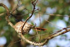 Süßer Haupthauptvogel, der im Nest stillsteht Lizenzfreies Stockbild