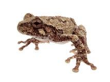 Süßer kleiner Frosch Stockfotografie