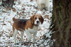 Süßer kleiner Hund steht im Schnee bedeckten Park und hört auf etwas stockbild