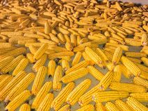 Süßer Mais Lizenzfreies Stockfoto