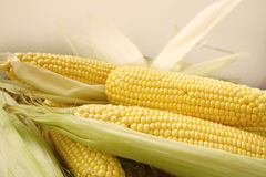 Süßer Mais Lizenzfreies Stockbild