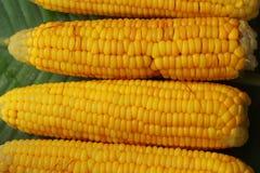 Süßer Mais Stockfotos