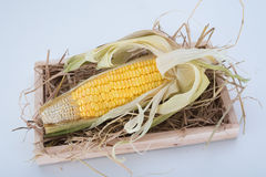 Süßer Mais Stockbild