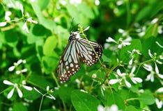 Süßer Nektar und ein Schmetterling lizenzfreie stockfotos