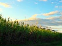 Süßer Sonnenuntergang Lizenzfreie Stockfotografie