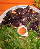 Süßer und purpurroter Basilikum auf einer runden Entwässerungsmittel-Schirm-Vertikale Lizenzfreies Stockfoto