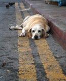 Süßer und trauriger verlassener Hund lizenzfreie stockfotografie