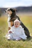 Süßes Baby, das Kuss vom Haustier-Schäferhund Dog Outside erhält Stockbild