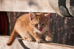 Süßes Kätzchen Stockbilder