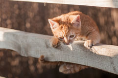 Süßes Kätzchen Stockbild