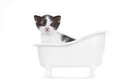 Süßes Kätzchen auf dem weißen Hintergrund, der entzückend schaut stockfoto