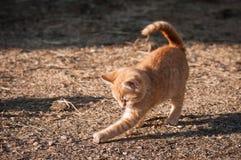 Süßes Kätzchen spielt allein Stockbild