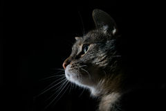 Süßes Katzenprofil Stockfoto