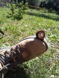Süßes kleines Igeles, das am Schuh sitzt stockbilder