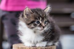 Süßes kleines Kätzchen sitzt auf dem Hinterhof Stockbilder