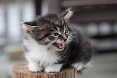 Süßes kleines Kätzchen sitzt im Holz Stockfotos