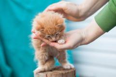 Süßes kleines orange Kätzchen sitzt auf dem Holz Lizenzfreie Stockfotos
