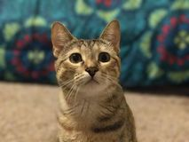 Süßes schönes Kätzchen Stockfoto