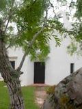 Süßhülsenbaum-Baum mit spanischem Auftrag im Hintergrund Goliad Texas Stockfoto