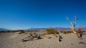 Süßhülsenbaum-flache Sanddünen in Death Valley lizenzfreie stockfotos