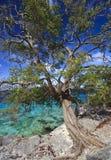 Süßhülsenbaumbaum Stockbilder