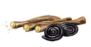Süßholzwurzeln mit Süßholz dreht Süßigkeiten Gezeichnete Illustration des Aquarells Hand lokalisiert auf weißem Hintergrund vektor abbildung