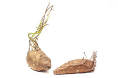 Süßkartoffel lizenzfreies stockbild