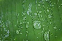 Süßwassertropfen auf Blatt des Gartens Lizenzfreie Stockfotos