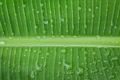 Süßwassertropfen auf Blatt des Gartens Lizenzfreie Stockbilder