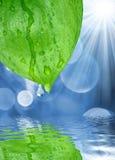 Süßwassertropfen auf grünen Blättern Stockbild