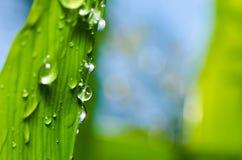 Süßwassertropfen der grünen Natur Stockfotografie