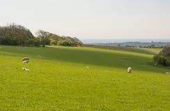 Süd- Abstiege nahe Worthing, West-Sussex, England lizenzfreie stockfotografie