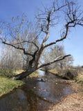 Süd-Boulder-Nebenfluss-Spur Lizenzfreies Stockfoto