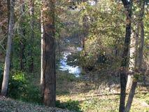 Süd-Carolina Creek Lizenzfreie Stockbilder