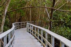 Süd-Florida-boaardwalk Lizenzfreies Stockfoto