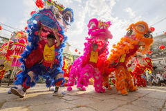 Süd-Lion Dance an der Augen-Eröffnungsfeier, Pagode Dame Thien Hau, Vietnam stockbild
