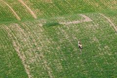 Süd-Moravian-Felder, Felder der Tschechischen Republik, moravian Hügel Lizenzfreies Stockfoto