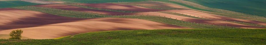 Süd-Moravian-Felder, Felder der Tschechischen Republik, moravian Hügel Stockfotografie