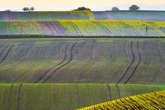 Süd-Moray-Felder Lizenzfreie Stockbilder