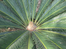 Süd-Palma-Nahaufnahme Stockfotografie