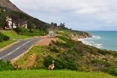 Südafrika, Garten-Weg Lizenzfreies Stockfoto