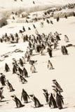 Südafrika, Pinguin-Kolonie stockfoto